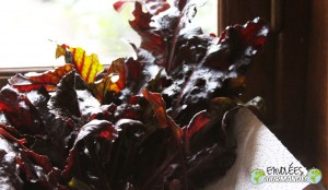 Beet greens at the party